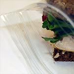Sandwich & Cookie Bags